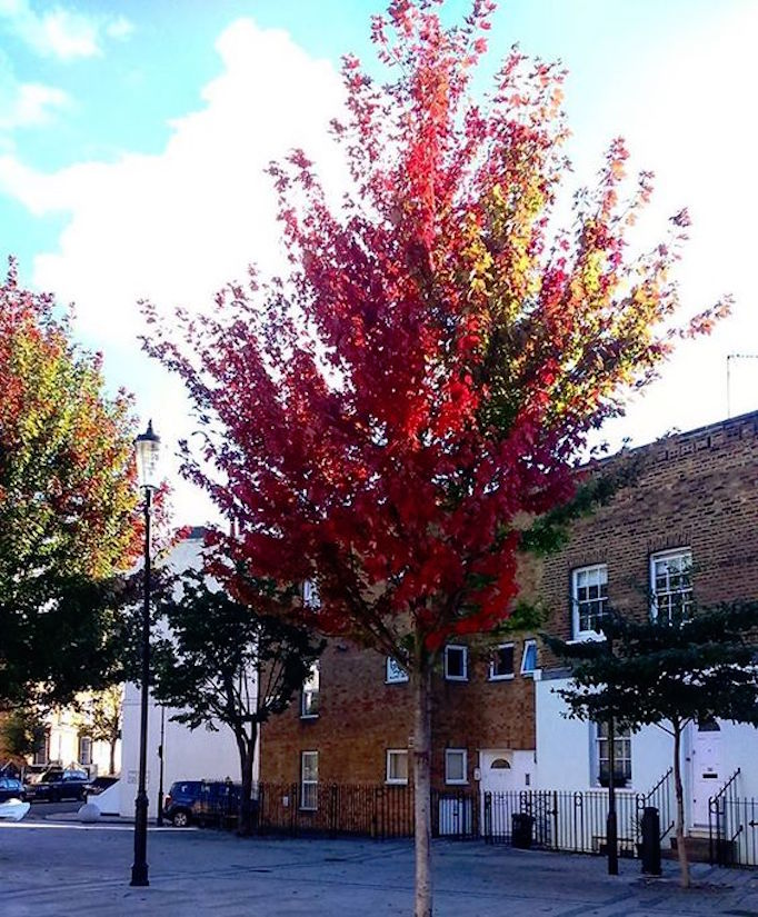 fall-in-london