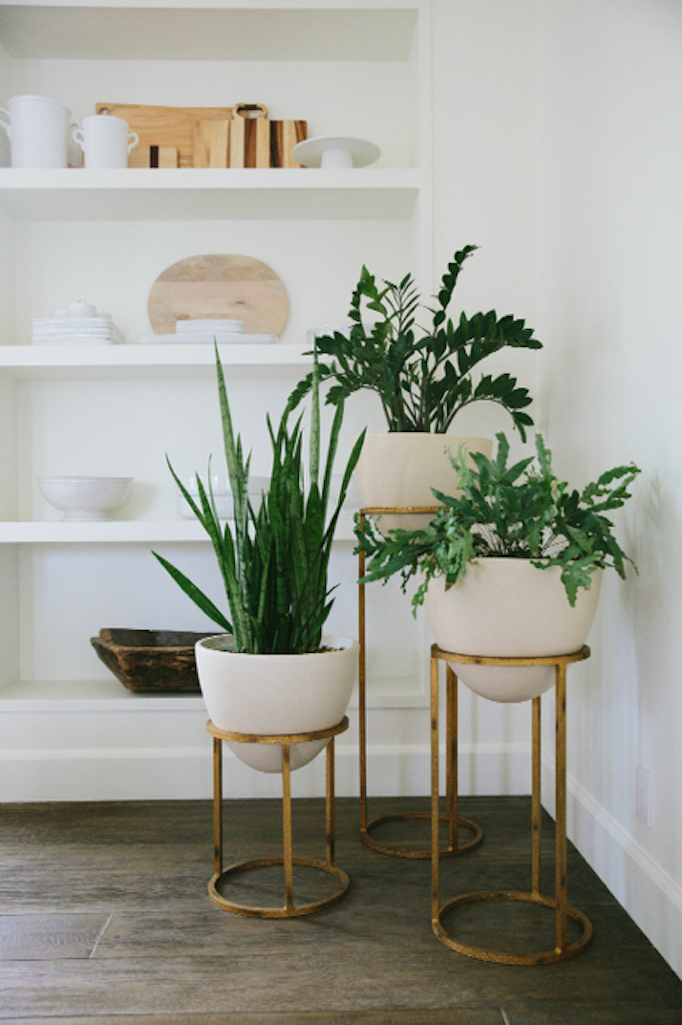 Styling Tip Adding Greenery With SucculentsBECKI OWENS