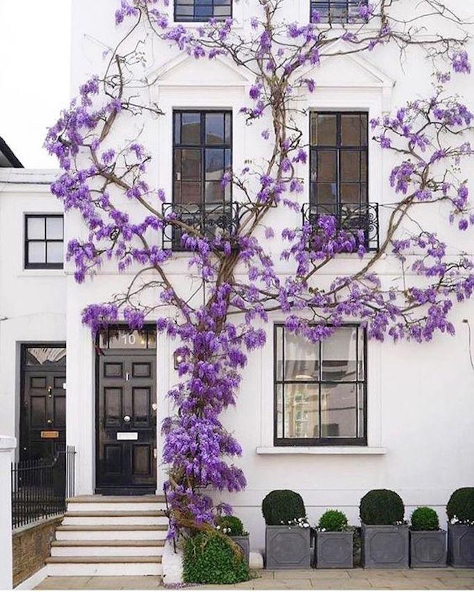BECKI OWENS Spring Exterior Purple Flowers